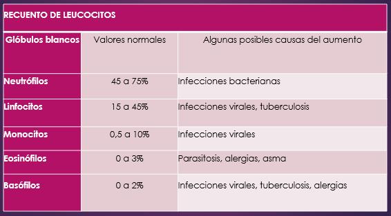 recuento leucocitos